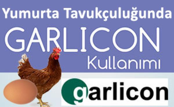 GARLICON - Yumurta Tavukçuluğunda