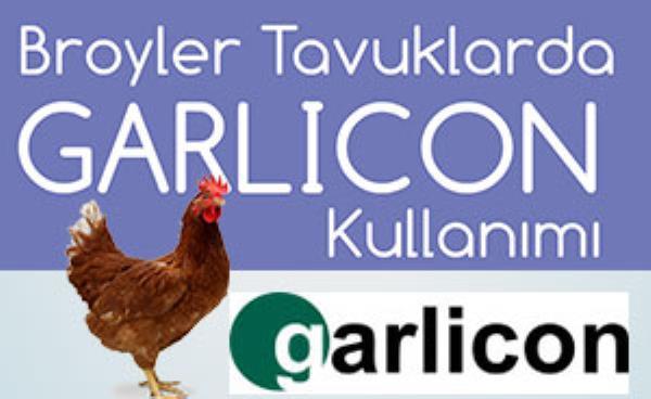 GARLICON - Broyler Tavuklarda