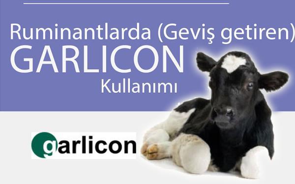 GARLICON - Ruminantlarda ( Geviş getiren )